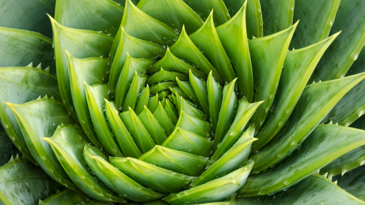 DIY: How to Make Your Own Aloe Vera Toner in 2 Easy Steps