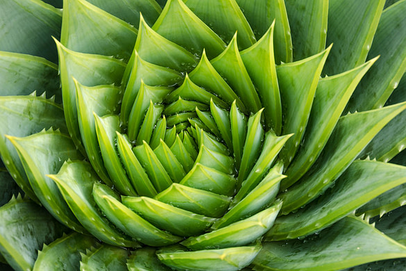 Aloe Vera plant most undervalued house plant